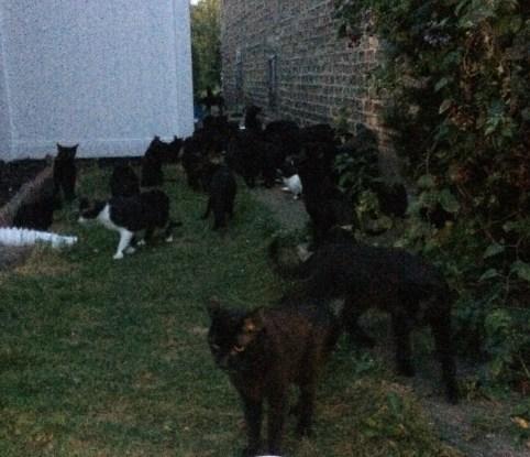 Hoarding Cats - Neighborhood Realty