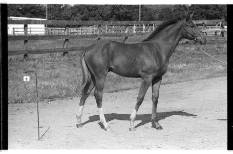 Secretariat Foal