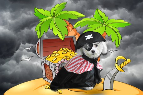 Halloween, pirate, dog