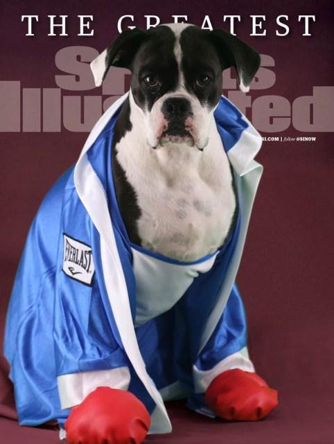 Halloween, Boxer, Dog
