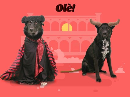Halloween, bull, matador, dog