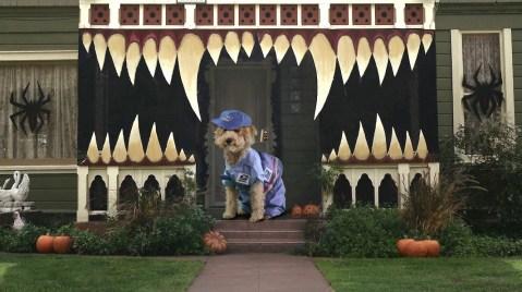 Halloween, Mailman, Dog