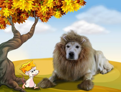 Sam Lion, lion costume