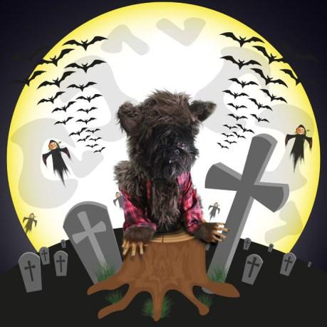 Halloween, werewolf, dog