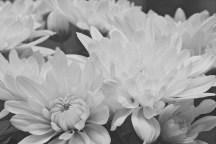 Flowers 5 Star - 29