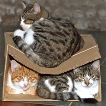 Double-decked Cats