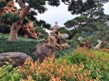 Shrubs, Rocks and Pagoda