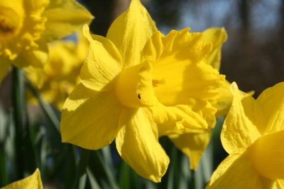 It's like a bit of sunshine in flower form