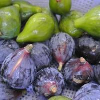Preserving Figs: Jam and Boozy