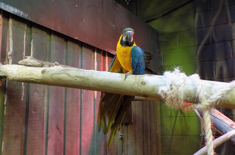 Folly Farm - Folly Interactive - Parrot