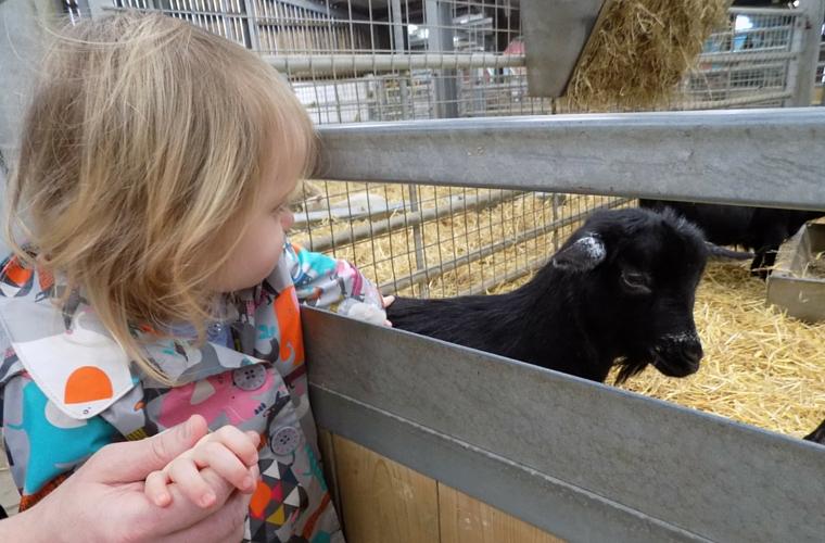 Folly Farm - the Jolly Barn - Goat