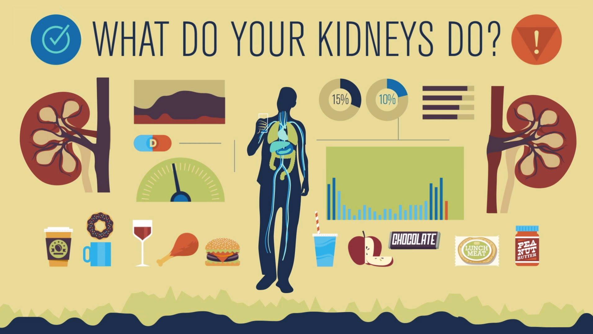 How Your Kidneys Work