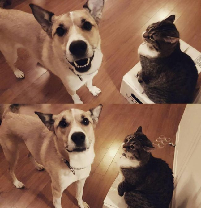 Before & after my cat booped my dog on the nose - seconds apart