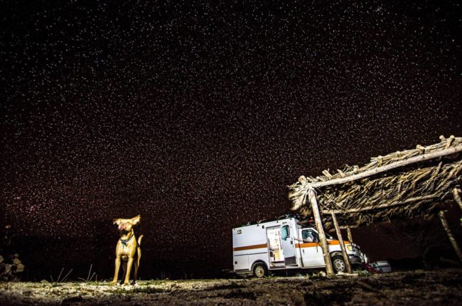 Dog, car and stars. What living in a van down by the river is really like