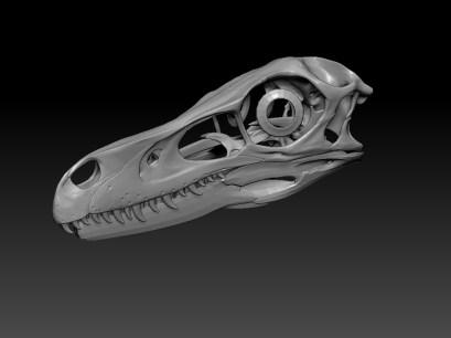 Velociraptor mongoliensis skull 3/4 front -work in progress-