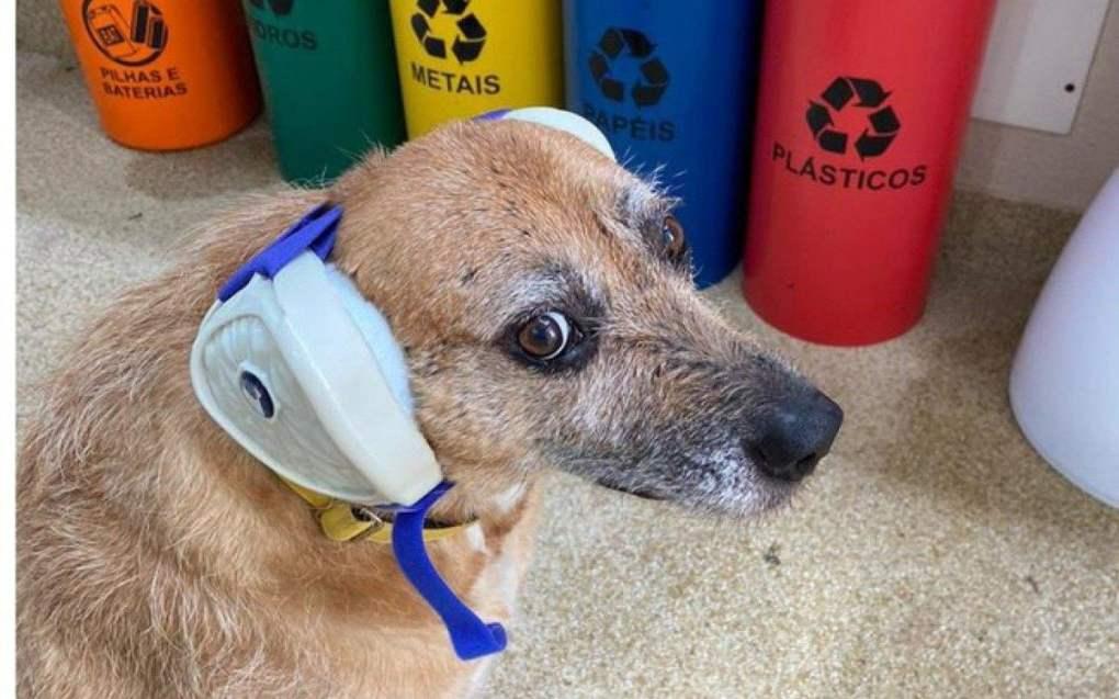 Dogfone promete proteger os pets do barulho - Reprodução
