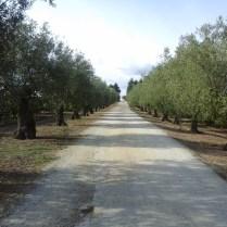 Quinta da Fata