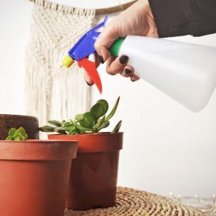 plantas-vaporizador