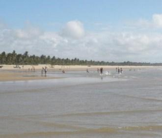 Boto mutilado é encontrado na praia de Feliz Deserto