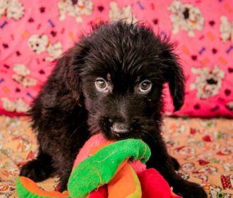 Adoção dá novo lar a animais acolhidos na Unidade de Zoonoses