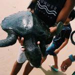Mancha de óleo que atingiu praias do Nordeste está afetando reservas