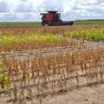 Produtores alagoanos apostam na excelente fertilidade da soja para a safra 2019/2020