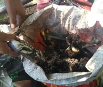 BPA apreende cerca de 800 caranguejos de forma irregular