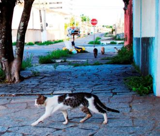 MPAL instaura inquérito para apurar abandono de animais no Pinheiro, Mutange e Bebedouro