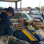 Operação Tamoio II: Homem é preso por crime ambiental na BR 101, em Alagoas