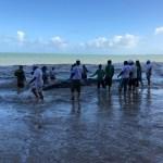 Baleia encontrada encalhada em Praia de AL é reintroduzida ao mar