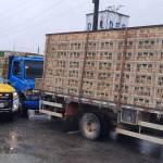 Em dez dias, cerca de 38 mil frangos sem certificação sanitária foram apreendidos em Alagoas
