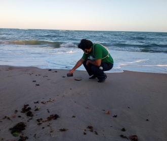 Filhotes de Tartarugas-Oliva vão ao mar pela primeira vez