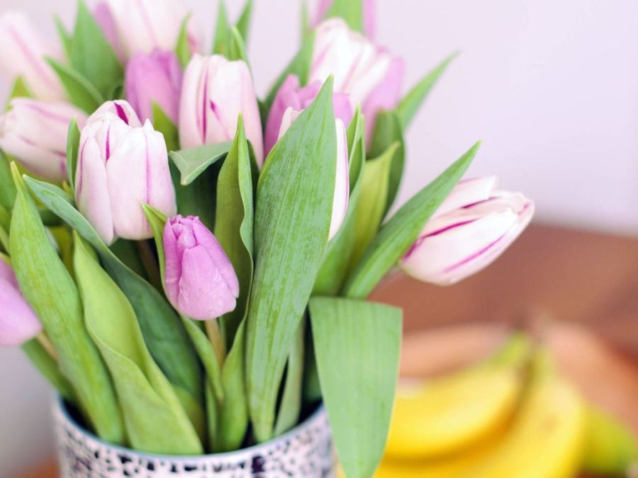 Image result for TULIPS COVENT GARDEN