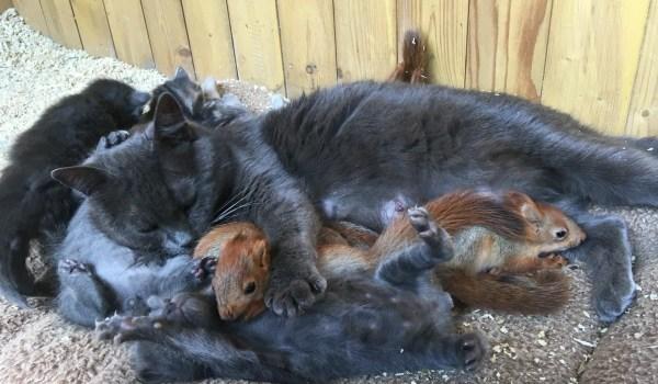 Кошка регулярно оставляла своих котят, чтобы покормить ...