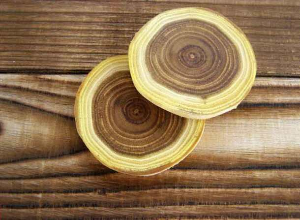 древесина робиния
