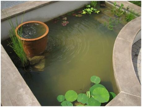 35 пруд с растениями