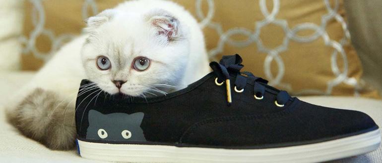Как убрать запах кошачьей мочи с ковра: обзор самых 82