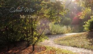 Odore Mio Mr Darcy Exclusive Perfume