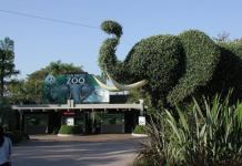 Zoo San Diego
