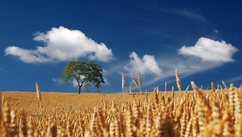 bezpieczne gospodarstwo rolne