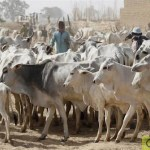 11 Year Old, One Other Killed As Farmers, Herders Clash In Edo