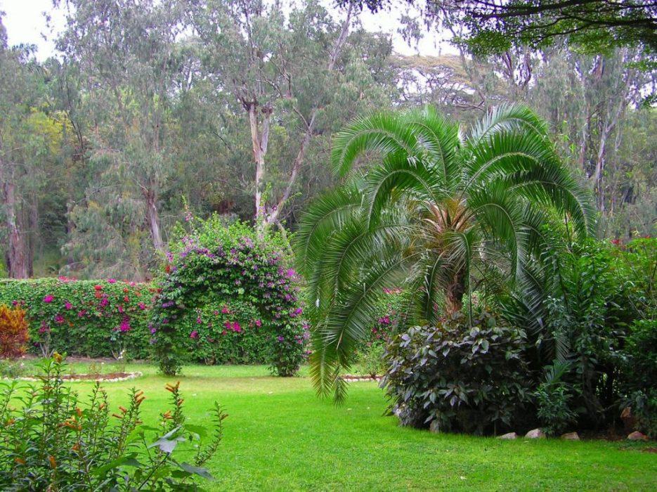 the garden at the Boulevard
