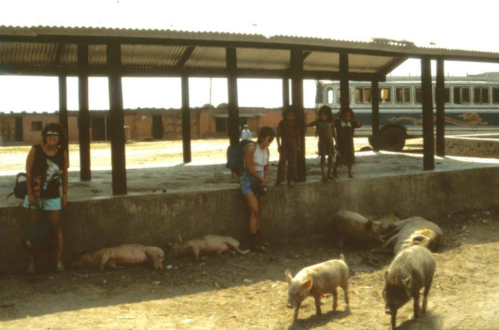 the pigs were offended by our smell after a week of trekking