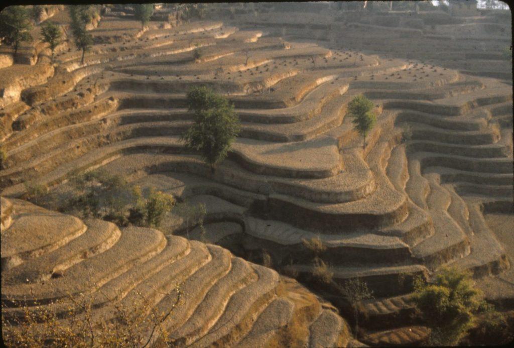 the terraced fields are bone dry