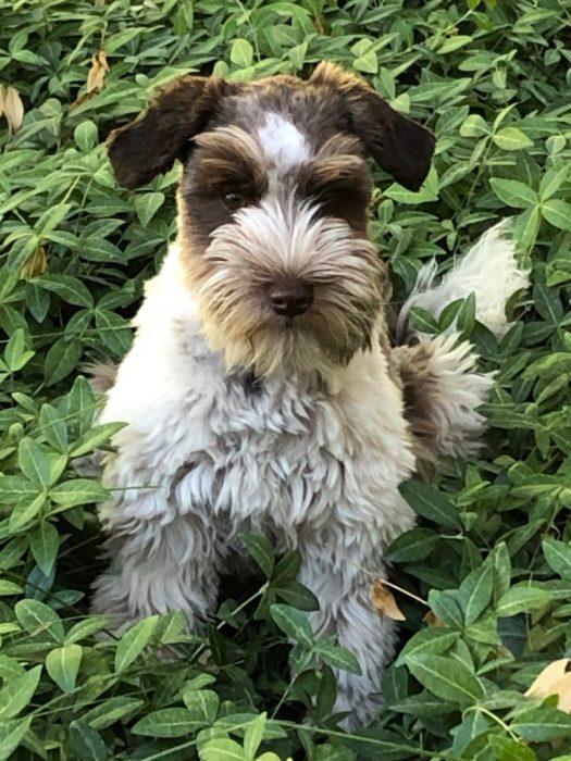cutest dog ever?!