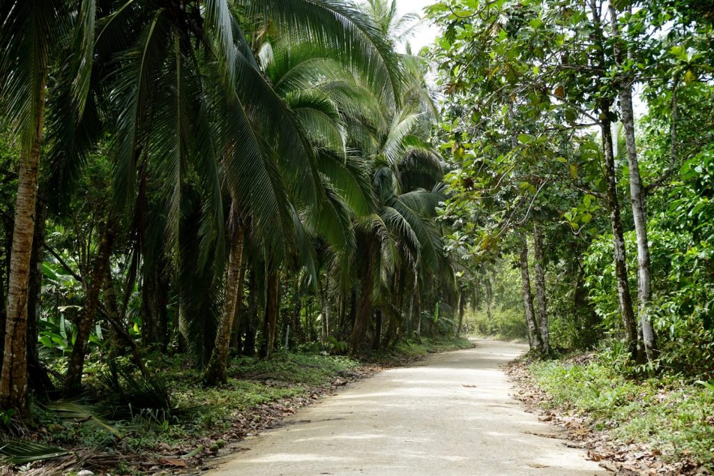 the road to the resort