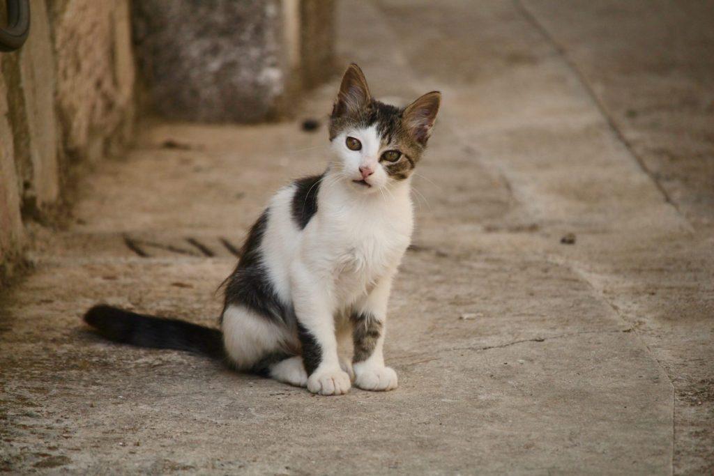 Puharici kitten