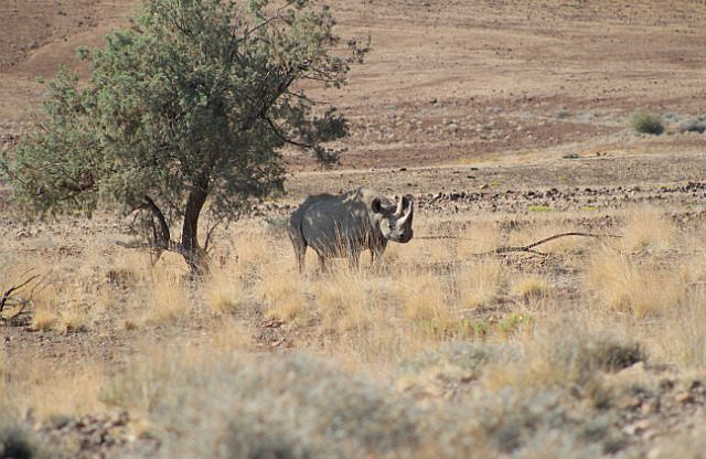 first rhino sighting