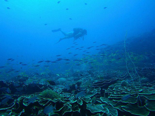 aquatic safari