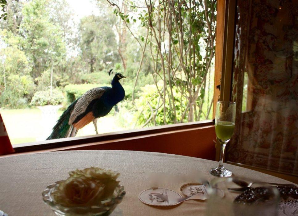 dining companion